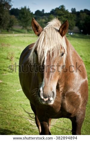 Horse portrait on pasture. Horse portrait JPEG background. Horse head JPG. - stock photo