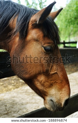 horse portrait on the fence - stock photo