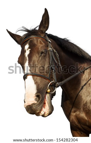 Horse portrait smiling isolated white background - stock photo