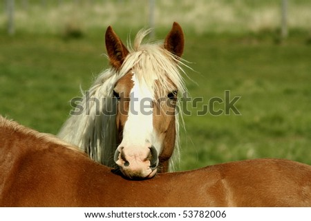 Horse posing for picture on another horse's back in field. - stock photo