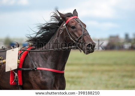 Horse racing is a type of testing horses on playfulness (speed), which concludes on the suitability for further breeding (use the breed) - stock photo