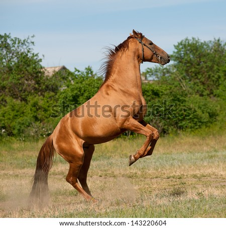 horse rear - stock photo