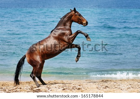 Horse rears up on the beach - stock photo