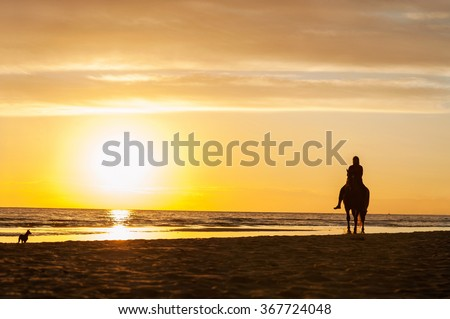 Horse riding at the beach on sunset background. Baltic sea. Multicolored summertime outdoors horizontal image. - stock photo