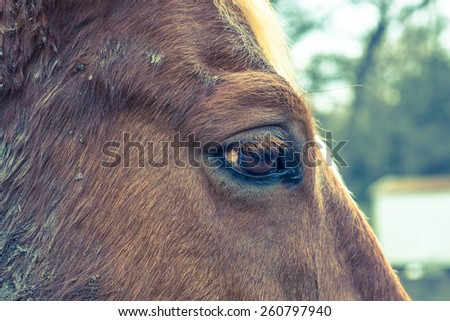Horse right eye profile with shallow depth of field and cross processing - stock photo