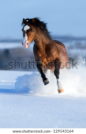 Horse running across the field in winter. - stock photo