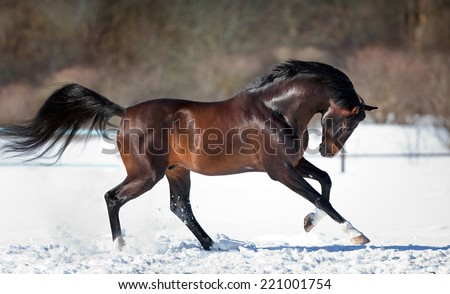 Horse running in the snow - stock photo