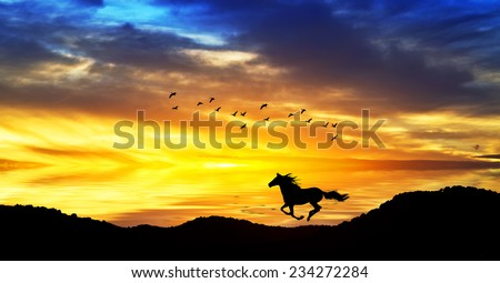 horse running through the mountains at sunset - stock photo