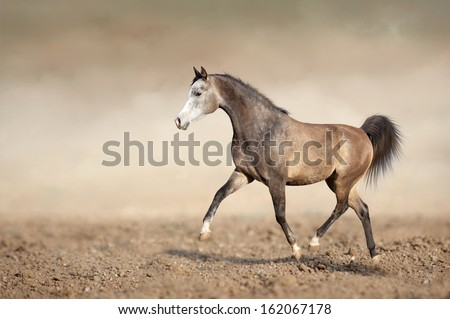 horse running trot on the sands