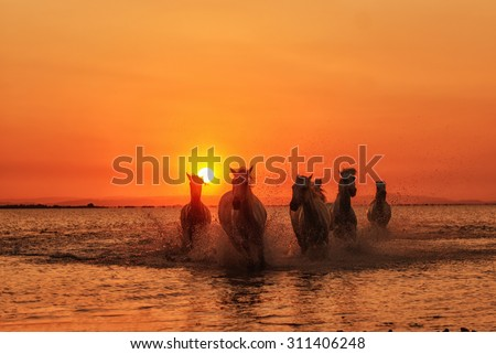Horse running under sunset - stock photo