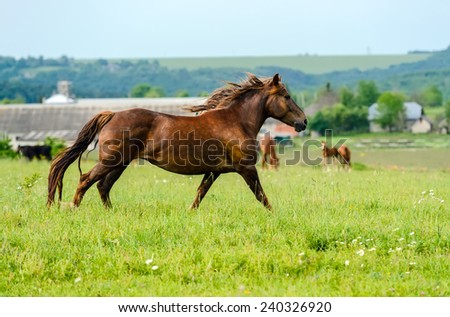 Horse runs across the grass spring field