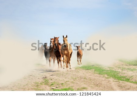 Horse runs gallop on the field - stock photo