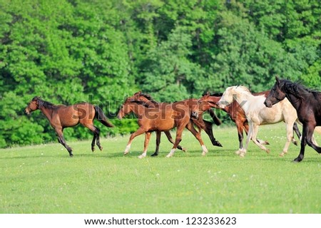 Horse runs gallop on the field