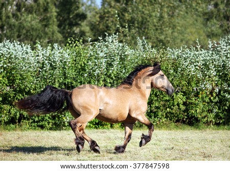 Horse runs gallop on the meadow - stock photo