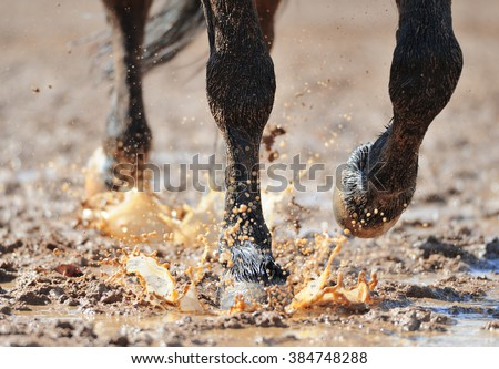 Horse's legs in the dirty water closeup - stock photo