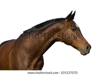horse's portrait isolated on white background - stock photo