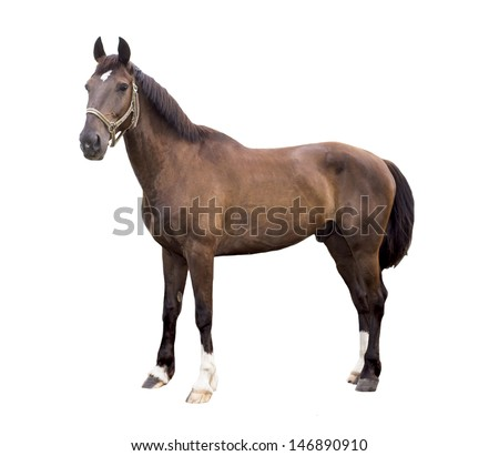 horse's portrait isolated on white background - stock photo