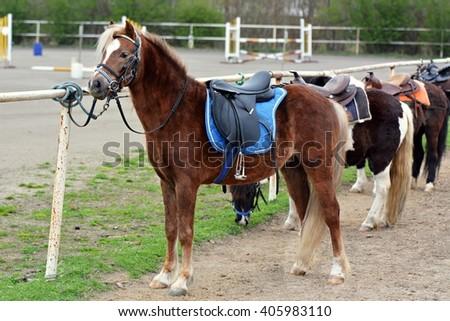 Horse saddles - stock photo