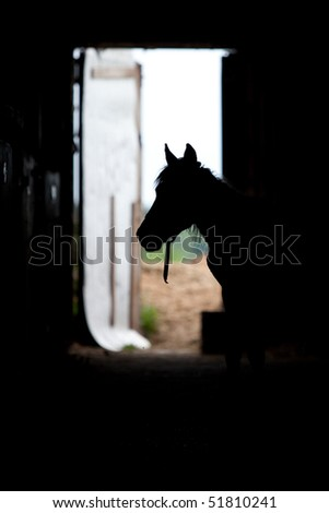 Horse silhouette in stable