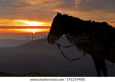 Horse silhouette on a background of evening mountains