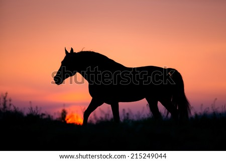 Horse silhouette on sunrise background - stock photo