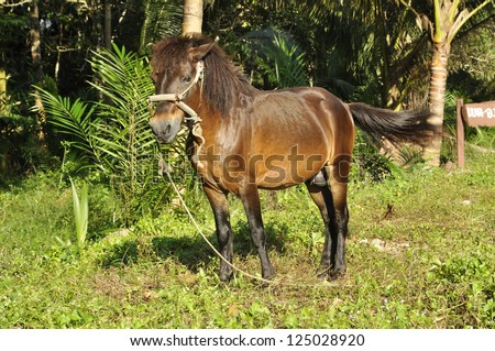Horse Stand Grass Field Brown - stock photo