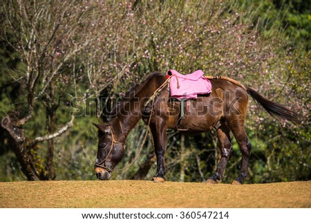 Horse stand in green field with pink blossom background