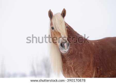 Horse standing alone in winter background - stock photo