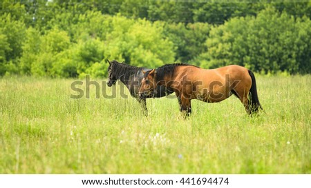 horse standing in the grass