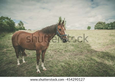 Horse standing on a green field in cloudy weather