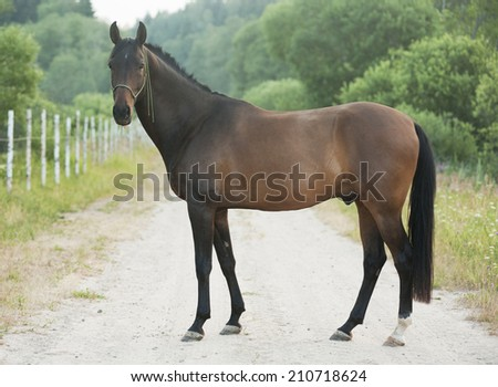 horse standing on meadow  - stock photo
