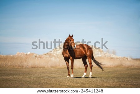 horse standing on the field - stock photo