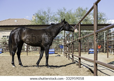 Horse standing outside licking a salt lick - stock photo