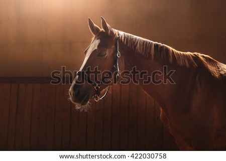 horse stands in the paddock - stock photo