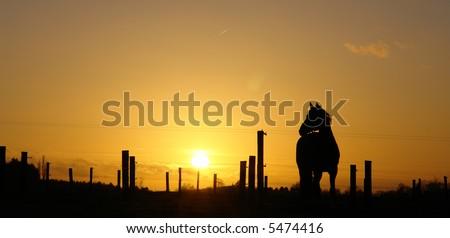 Horse sunset silhouette - stock photo