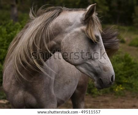 Horse switching flies - stock photo