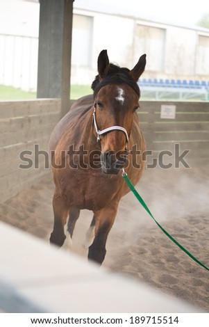 horse training - stock photo