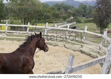Horse training in a pen - stock photo