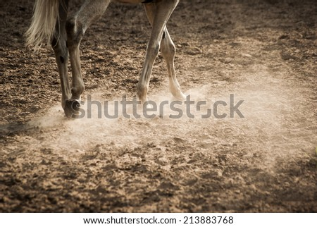 horse trotting on sandy paddock in sunset - stock photo
