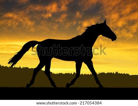 Horse under sunset  - stock photo