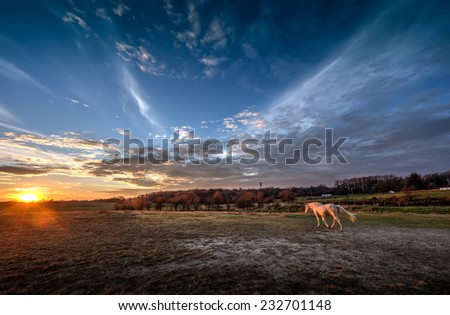 Horse walking into a magnificent sunset - stock photo