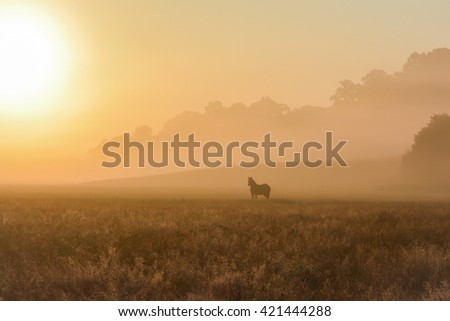 Horse watching from a foggy field - stock photo