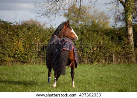 Horse wearing a waterproof outdoor rug for warmth and protection from wet weather.