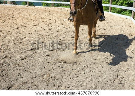Horse when riding in the paddock on sand - stock photo