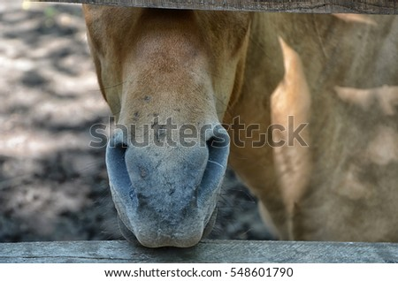 Horse who shoved her muzzle between the boards of the fence, close-up