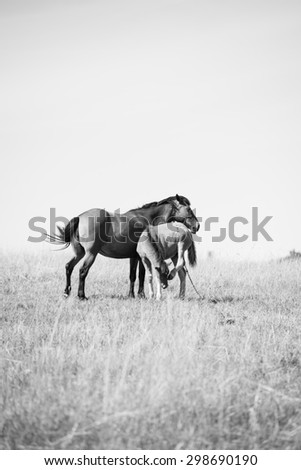 Horse with baby on a field