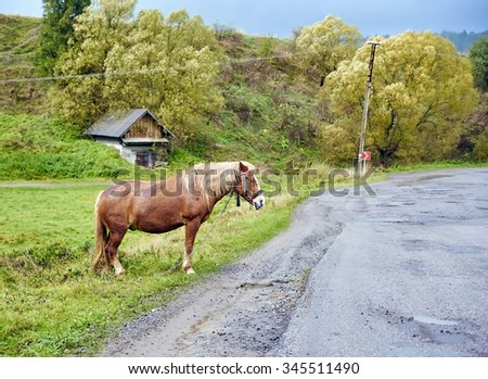 Horse with beautiful mane on the road. Rural scene. - stock photo