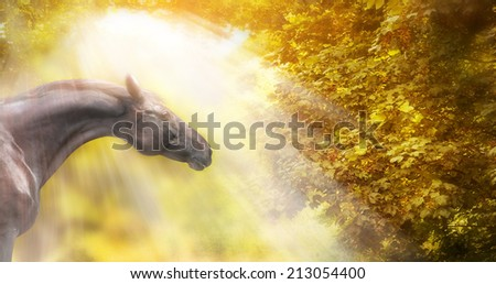 Horse with beautiful neck  in autumn sunlight , banner - stock photo