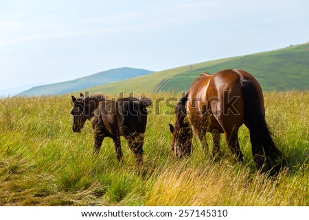 horse with foal on meadow