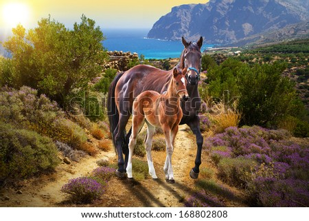 Horse with foal walking on the road at sunset - stock photo